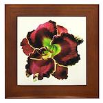 Dark Purple Daylily Framed Tile