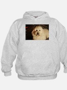 flufy white dog at night Sweatshirt