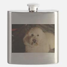 flufy white dog at night Flask