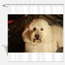 flufy white dog at night Shower Curtain