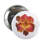 Coral Red Daylily 2.25