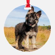 Hayden 2016 Ornament