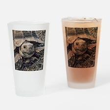 Cute Sulcata tortoise Drinking Glass