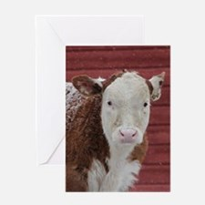 Calf In Snow Greeting Cards