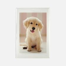Golden Retriever Pup Rectangle Magnet