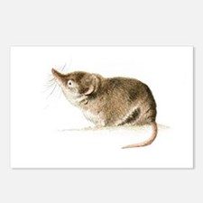 Shrew Postcards (Package of 8)