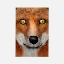 Red Fox Magnets