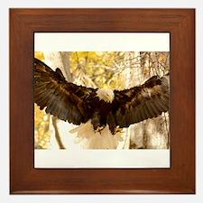 Bald Eagle in Flight Framed Tile