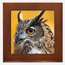 Unique Eagle photos Framed Tile