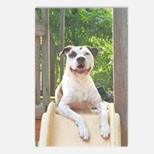 Pit Bull T-Bone's Tree House Postcards (Package of