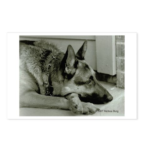 Cody Postcards (Package of 8)