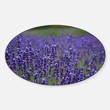 Purple lavender meadow Decal