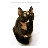 Calico cat Postcards
