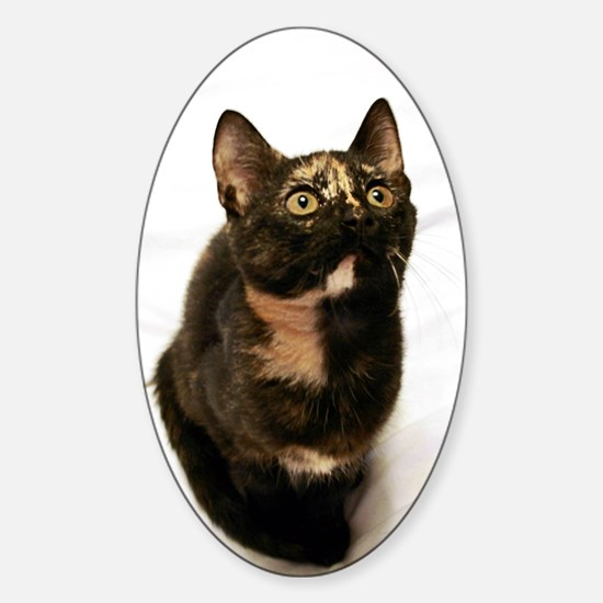 Tortie Decal