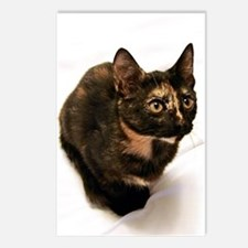 Tortie Postcards (Package of 8)