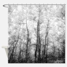 Aspen Tree Forest, Black & White Photography Showe