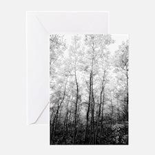 Aspen Tree Forest, Black & White Photography Greet