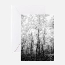 Black and White Aspens Greeting Card