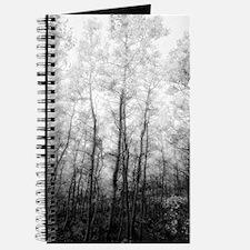 Black and White Aspens Journal