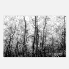 Black and White Aspens Postcards (Package of 8)