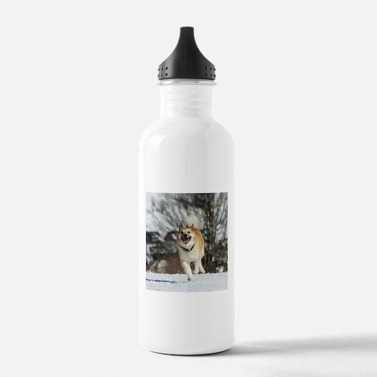 IcelandicSheepdog016 Water Bottle