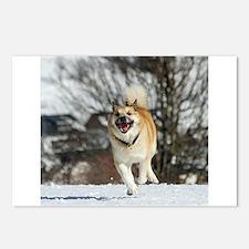 IcelandicSheepdog016 Postcards (Package of 8)