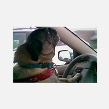 Funny Puggle Rectangle Magnet (100 pack)