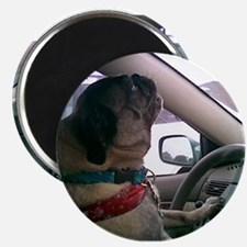 "Cute Dog car 2.25"" Magnet (100 pack)"