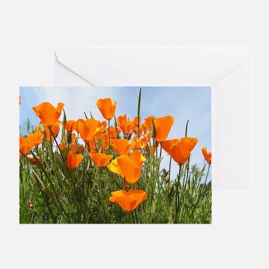 Orange Poppies Greeting Card