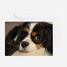 Unique Cavalier king charles Greeting Card
