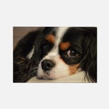 Unique Cavalier king charles spaniel Rectangle Magnet