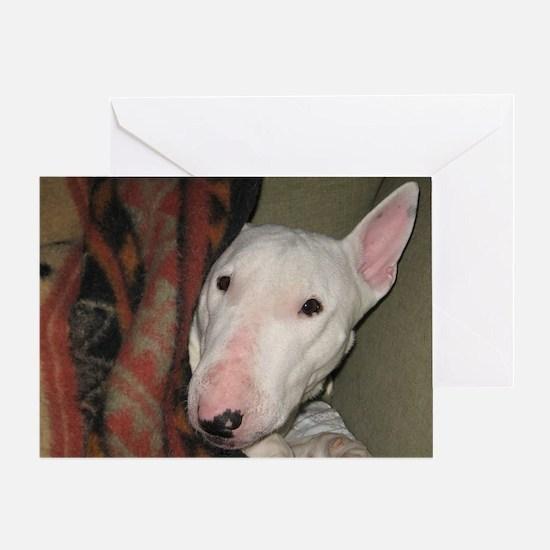 Cute English bull terrier vintage Greeting Card