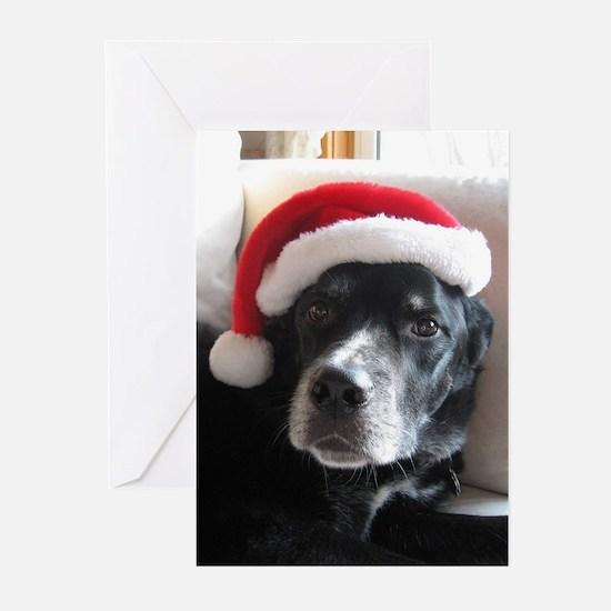 Santa Dog s Greeting Cards