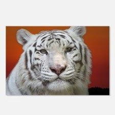 Funny White tiger Postcards (Package of 8)