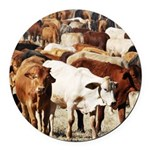 A Herd of Cattle Round Car Magnet