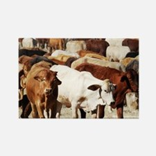 A Herd of Cattle Rectangle Magnet