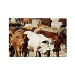 A Herd of Cattle Rectangle Magnet (100 pack)