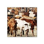 A Herd of Cattle Square Sticker 3
