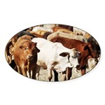 A Herd of Cattle Sticker (Oval 50 pk)