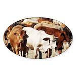 A Herd of Cattle Sticker (Oval 50 pk)
