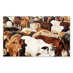 A Herd of Cattle Sticker (Rectangle 50 pk)
