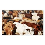 A Herd of Cattle Sticker (Rectangle)