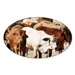 A Herd of Cattle Sticker (Oval)