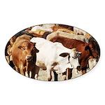 A Herd of Cattle Sticker (Oval)