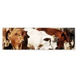 A Herd of Cattle Sticker (Bumper)
