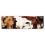 A Herd of Cattle Sticker (Bumper)