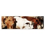 A Herd of Cattle Sticker (Bumper 50 pk)