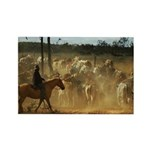 Herding Cattle Rectangle Magnet (100 pack)
