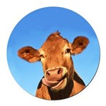 Selfie Cow Round Car Magnet