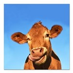 Selfie Cow Square Car Magnet 3